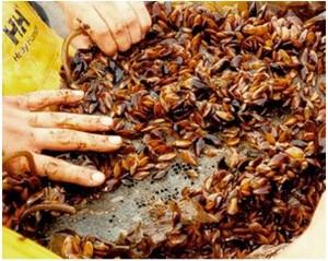 Golden Mussel Chowder Recipe — Dishmaps